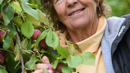 Nina Plumbe in her plum orchard near Burnham Market which she is passing over to her cousins Bruin a