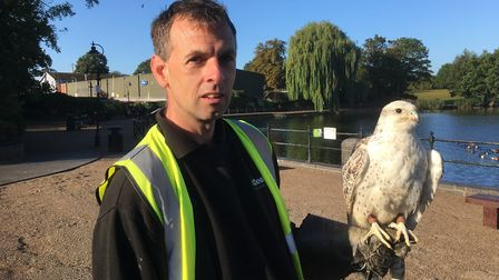Falconer Mark White who is behind the scheme to fly a hawk to scare off pigeons in Diss. Picture: Si