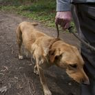 One reader says dogs should be kept on a lead at all times in public places. Pictured is a dog on a