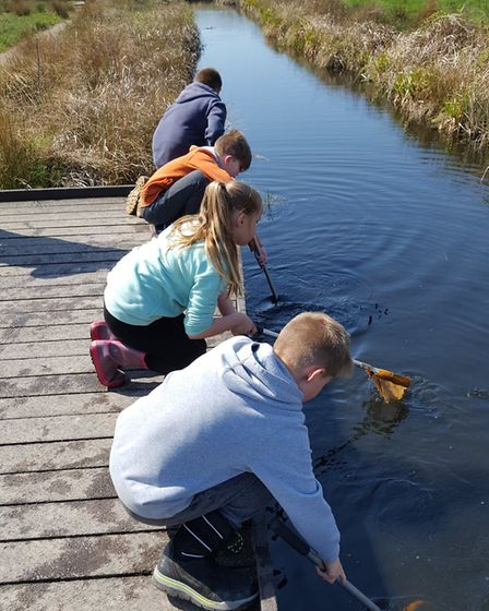 School children dyke dipping at Carlton Marshes. Picture: BA