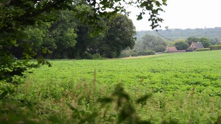 Woodland near Ringland is on the route of the mooted Western Link for the NDR. Picture: DENISE BRADL
