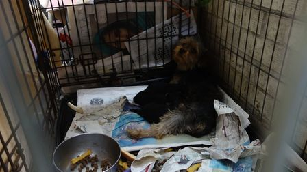 Some of the dogs rescued from the puppy farm in Thurlton run by Zoe and Michael Rushmer and Jacob Mu