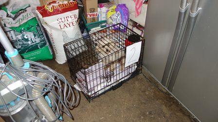 One of the dogs at the puppy farm in Thurlton. Photo: RSPCA