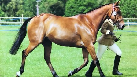 Eighteen-year-old mare Sindy who had to be put down following an attack in a paddock in the Mendham