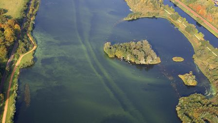 Blue Green algae now hits Whitlingham Broad on the southern edge of Norwich - Sept 2011