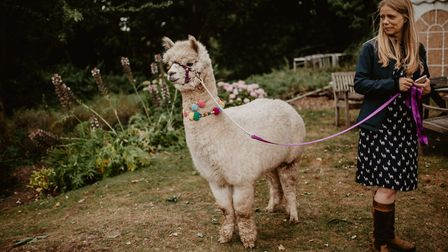 Owner Gayle Millward walking Summer the alpaca, which guests can do after afternoon tea Credit: Cam