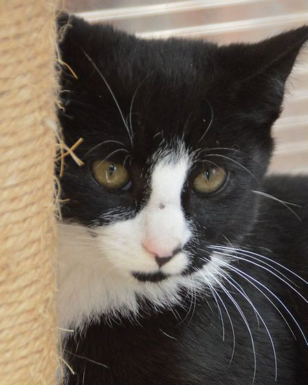 Brewster needs a home. Photo: RSPCA East Norfolk
