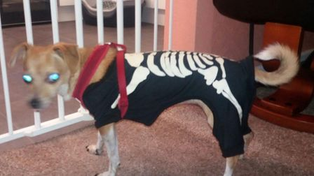 In Hingham, Nikki Hill, partner Dan Smith and their dog Pip, are gearing up for trick or treaters. P