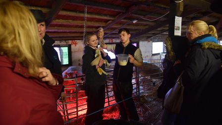 Easton and Otley College's annual lambing weekend at Easton campus. Picture: Sonya Duncan