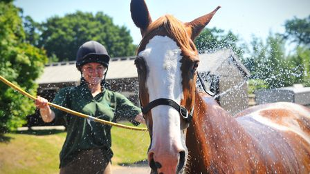 Eric is cooled down in the hot weather at Easton and Otley College's equestrian centre by groom Laur