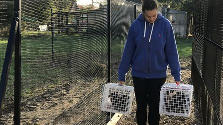 Two by two - volunteer Liza ward, 26 from Norwich, helps to move the cats from their old home to the