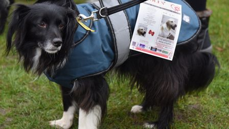Shadow, four, wears the posters at the Stolen Dog meeting in Attleborough to raise awareness of pet