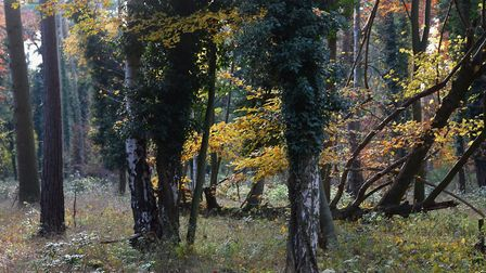 The pair held the event in Thetford Forest. Picture: DENISE BRADLEY