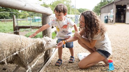 Wroxham Barns has won best half day out. Picture: Keiron Tovell Photography