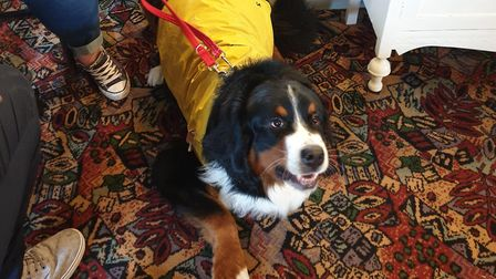 The Acle Bridge Inn at Acle has been named among the most dog friendly in the East of England in a p