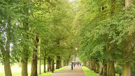 West Norfolk Council is to vote on a motion which will see a tree planted per person in the borough.