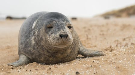 Councillors have heard about a charity's efforts to protect seals. Pictures: Ed Marshall
