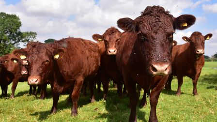Livestock farmers remain upbeat after research showed the impact of last year's Veganuary campaign o
