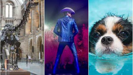 Dippy the Dinosaur at Norwich Cathedral, The Killers at Carrow Road and a swimming pool for dogs are
