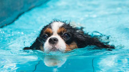 A swimming pool for dogs is opening in Norwich Credit: Getty Images/iStockphoto