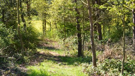 """Woodland planting and """"carbon trading"""" are becoming increasingly important aspects of land managemen"""