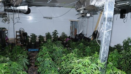 183 cannabis plants were seized from a home in Lowestoft Road, Hopton, after a raid by police. PHOTO