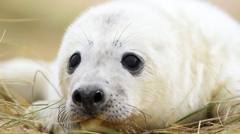 The seal colony between Winterton and Horsey Picture: James Bass