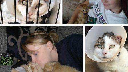 Scats and Bubba the cats, who were victims of attacks in April. Scats did not survive. Pictures: Ell