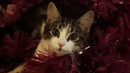 Spangles has been missing since December 16. PHOTO: Tina Roberts