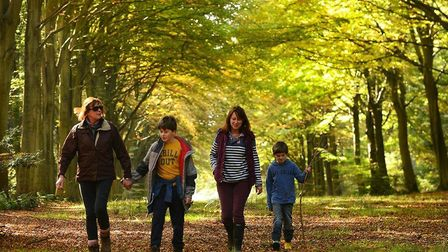 The Felbrigg trail is one of the winter Norfolk walks you should try over Christmas and New Year Cre