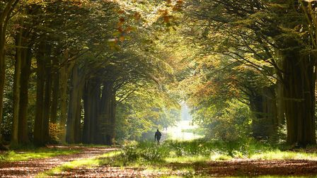 Felbrigg trail Credit: Supplied by Norfolk County Council