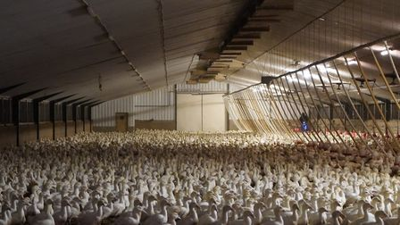 The conditions found at Gressingham Duck farms in Norfolk. Picture: Animal Justice Project
