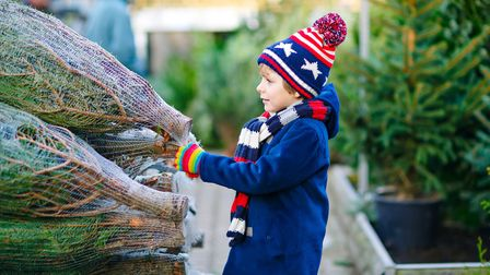 Choosing whether to buy an artificial or fresh Christmas tree is an all-important decision. Picture: