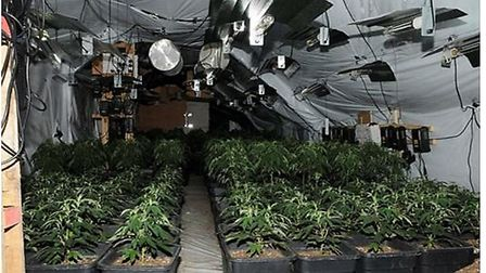 The cannabis factory discovered in Ditchingham, near Bungay. PIcture: Norfolk Police