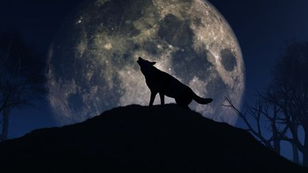 A full wolf moon will appear tonight. Picture: Getty Images/iStockphoto/kirstypargeter