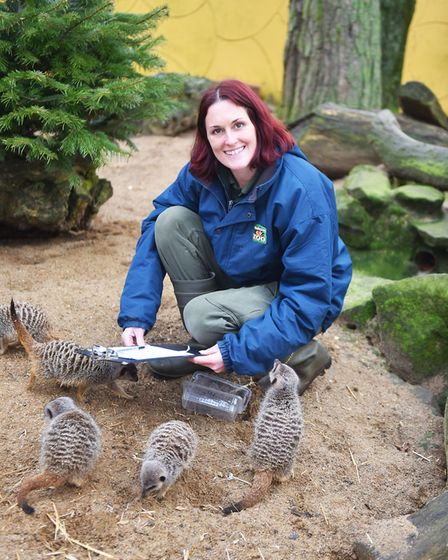 Every year Banham Zoo have to count their animals, from every single bug to their tigers. Deboarah H