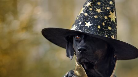 One of the prizes on offer is for best dressed dog Picture: Getty Images/iStockphoto