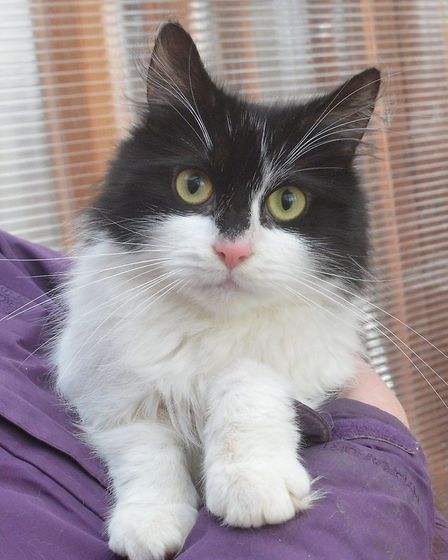 Can you give Dulux a home? Photo: RSPCA East Norfolk