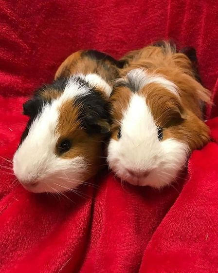 Risotto and Basmati need a home. Photo: RSPCA East Norfolk