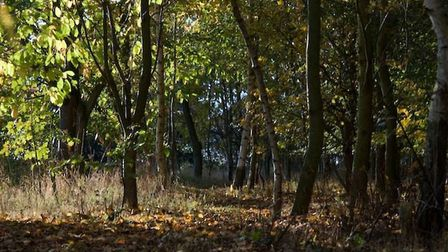 Autumn in woods at Costessey, Taken by Peter Solomon from Costessey.PS2230@aol.com.