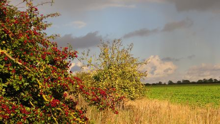 Norfolk farmers have been urged to consider the biodiversity and carbon reduction benefits of their