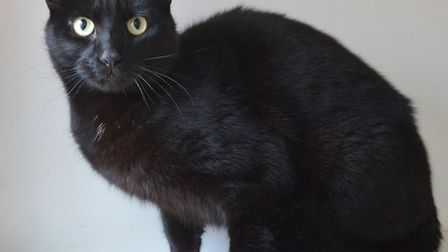 Shay needs a home. Photo: RSPCA East Norfolk