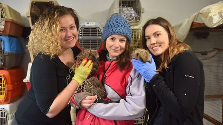 Voluntees of PACT Animal Sanctuary caring for hedgehogs. Pictures: Brittany Woodman