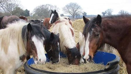 Hillside Animal Sanctuary has stopped its open days which it relied on for funds. Photo: Hillside An