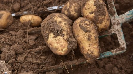 The closure of chip shops and fast food takeaways has left thousands of tonnes of potatoes without a