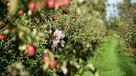 Drove Orchards in Thornham is offering an order and collect service Picture: Ian Burt