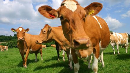 Need milk? Try your local dairy farm, but get mooove on... Picture: Getty Images/iStockphoto
