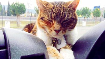 The Thacker family cat, Topsy, who has accompanied them on their European travels. Picture: Thacker
