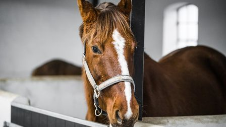There is also specific advise for horse owners Credit: Getty Images/iStockphoto