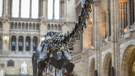 Dippy the dinosaur is going on tour for three years. Picture: Trustees of the Natural History Museum